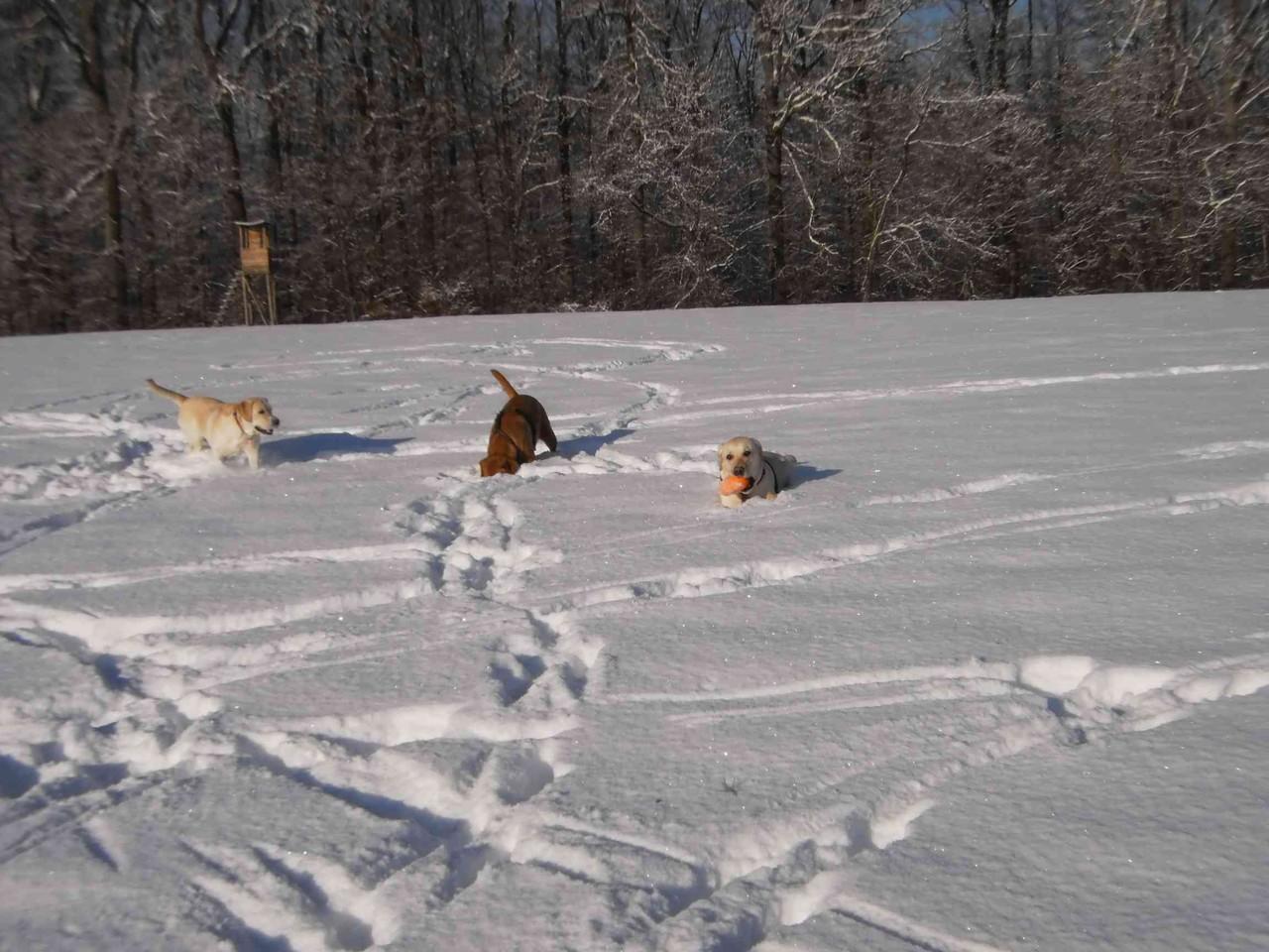 Anfang Dezember 2012: Schnee satt ...