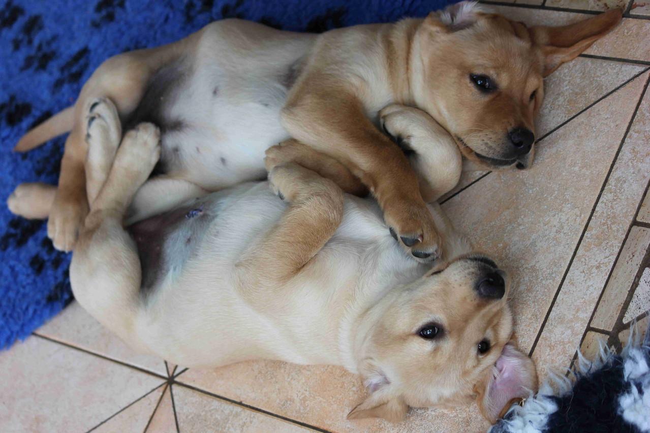 Geschwisterliebe.