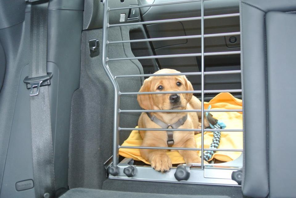 Ich kann jetzt auch richtig Auto fahren, auch wenn ich es erst nicht verstehen wollte, warum ich hinten sitzen muss.