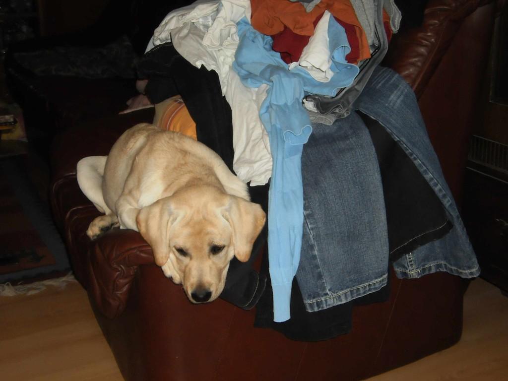 Nur sollten meine Zweibeiner vielleicht die Wäsche auch aufräumen.