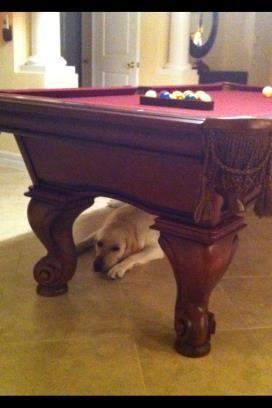 ... und auch noch das Spiel mit den Kugeln - harte Arbeit für einen Hund!!
