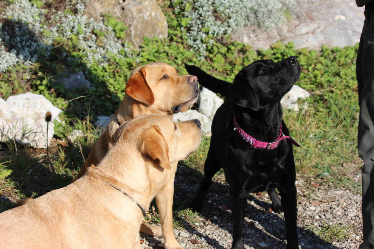 Rocky, Bronko und Bella