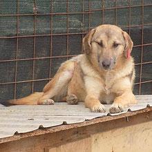 Hunde vom PS ADJUD  ⏰~2015 📐~45cm