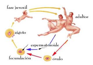 Fecundación interna