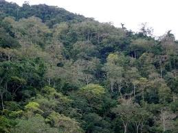 Bosque submontano