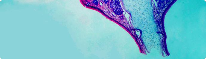 Mikroskopaufnahme Stimmungsbild