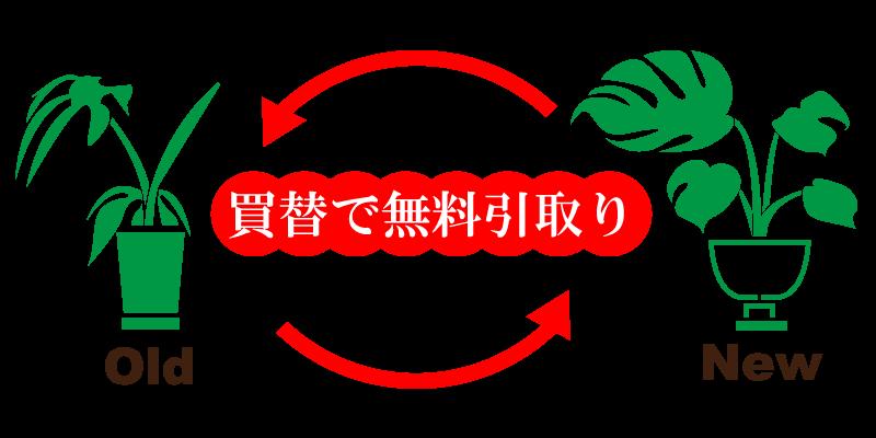 明朗会計で処分に困った観葉植物を引き取りエリアは東京都23区エリアで、1鉢1500円(税別)で出張費は一律1,500円(税別)