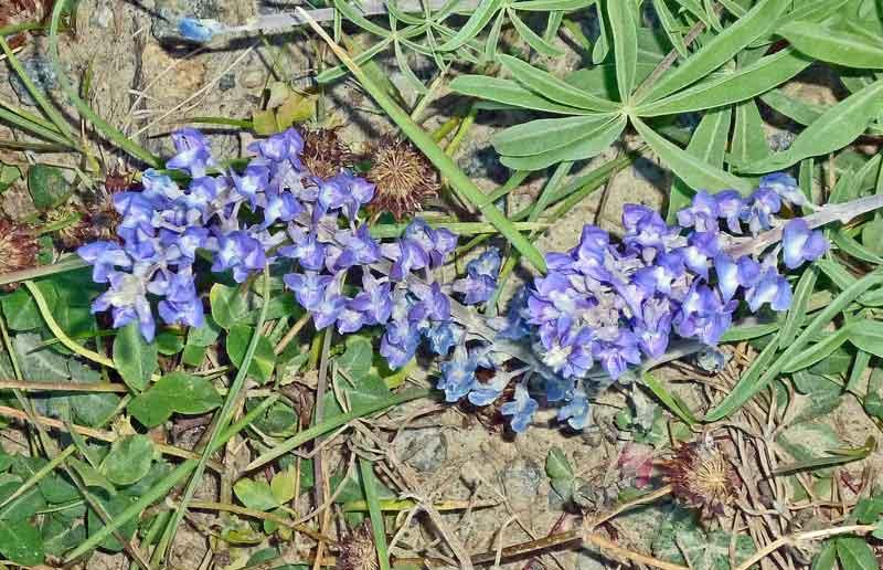 Bild 12 Kleine Wanderung - Blumen im Lamar Valley