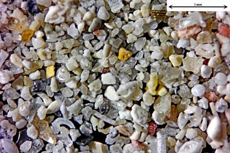 Bild 1 Sand aus Santanyi-Mallorca/Spanien, vom Badestrand Objektiv Zeiss Plan 2,5/o,o8 Auflicht