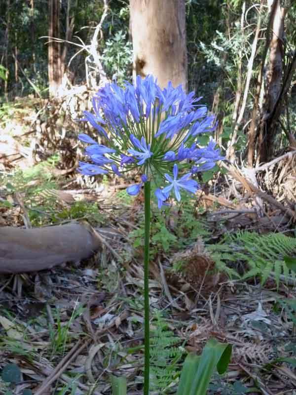 Bild 6 Blumen am Rande der Levada