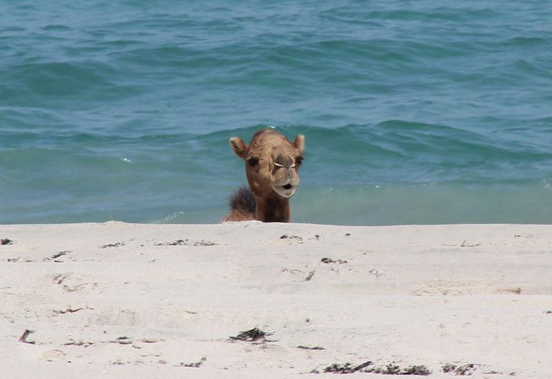 Bild 9 Blick auf das Meer, ein Kamel badet???
