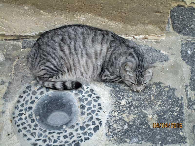 Die Katze hat die Ruhe weg beim Bummel durch die Gassen von Syrakus