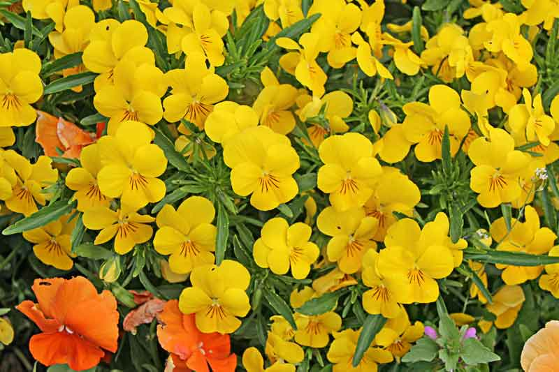 Bild 22 Blumen in einem Park in Honfleur.