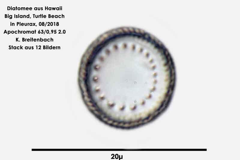 Bild 102 Diatomee aus Hawaii, Big Island, Turtle Beach. Gattung: konnte von mir nicht bestimmt werden