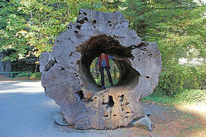 Bild 5 Einer der ausgehöhlten Giganten