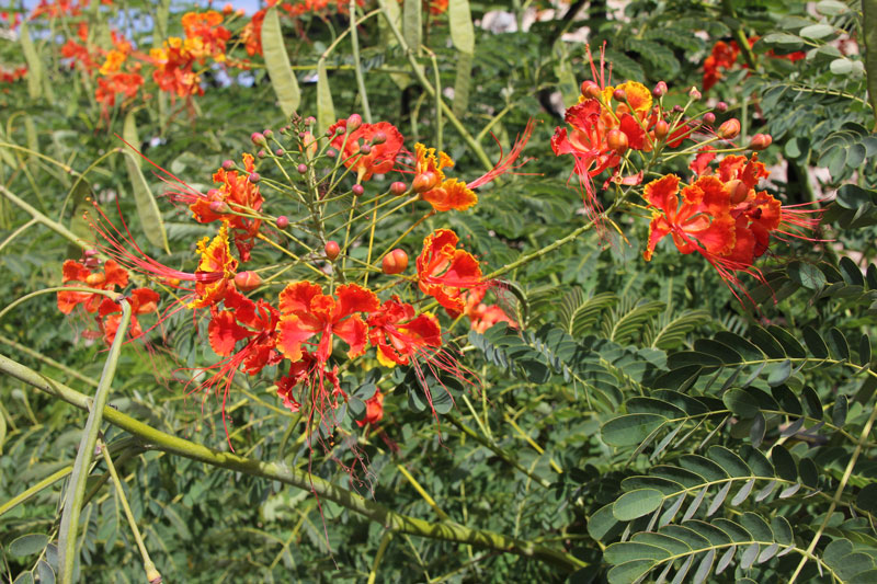 Blumen im Park von Mutrah