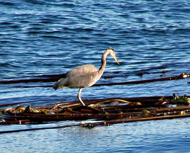 Bild 8 Viele Vögel können hier beobachtet werden