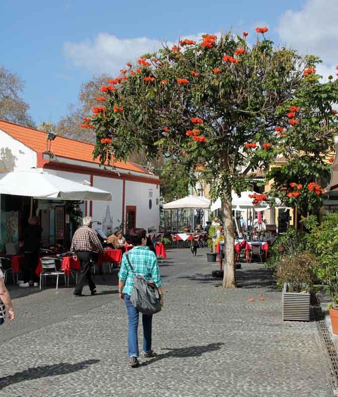 Bild 15 In den Straßen von Madeira