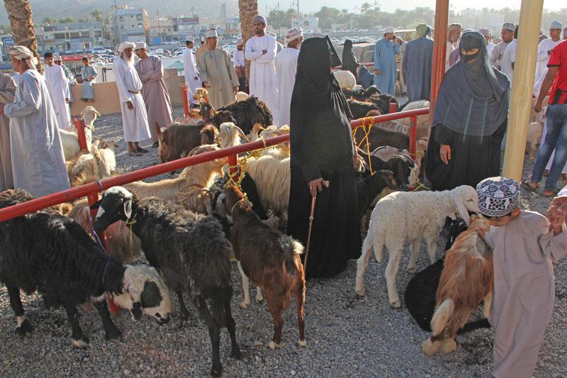 Bild 7 Viehmarkt in Nizwa, die Frauen entscheiden was gekauft wird