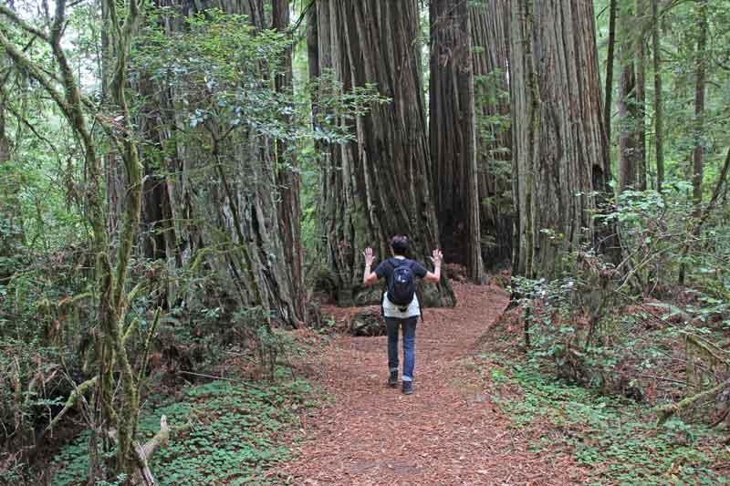 Bild 24 Margit zwischen den Redwoods auf dem Hiouchi Trail