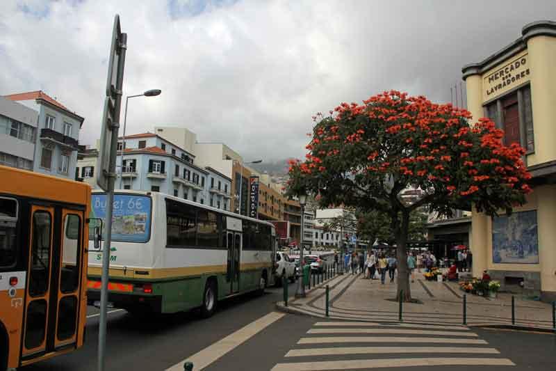 Bild 42 In den Straßen von Funchal