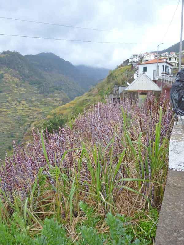 Bild 23 Hier wird Zuckerrohr angebaut