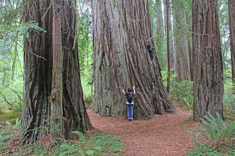 Bild 19 Pit in den Redwoods auf dem Hiouchi Trail