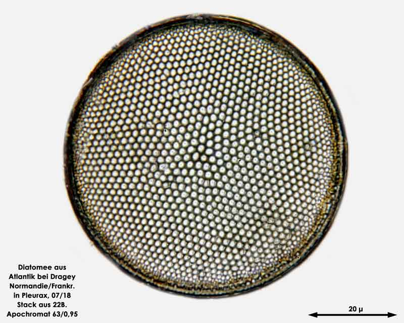 Bild 34 Diatomee aus dem Atlantik bei Draghey de Monton (Normandie). Art: Coscinodiscus centralis Ehrenberg 1839