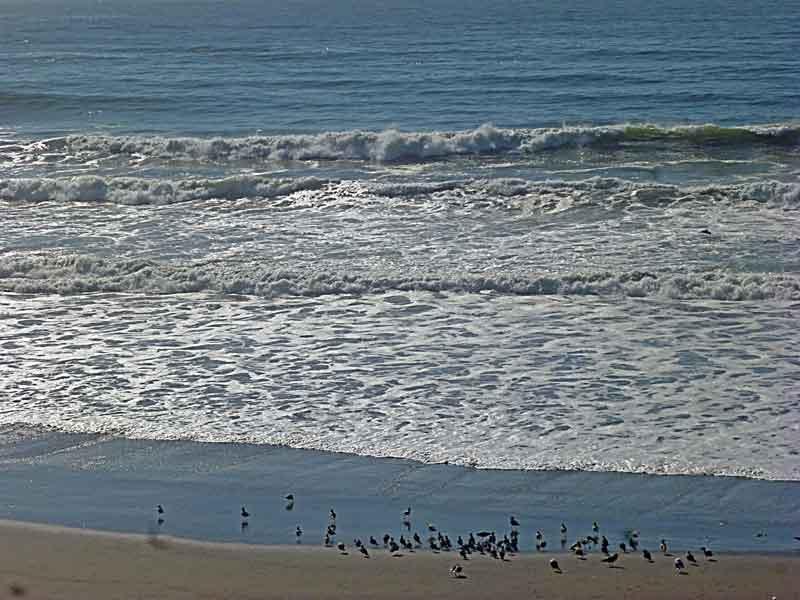 Bild 22 Blick auf die vielen Wasservögel