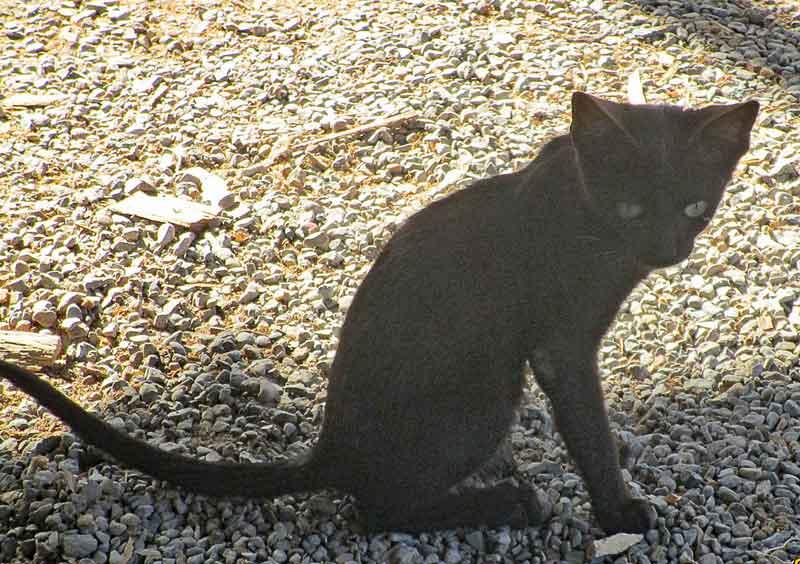 Bild 25 Katze in der Schiffswerft in Sur.