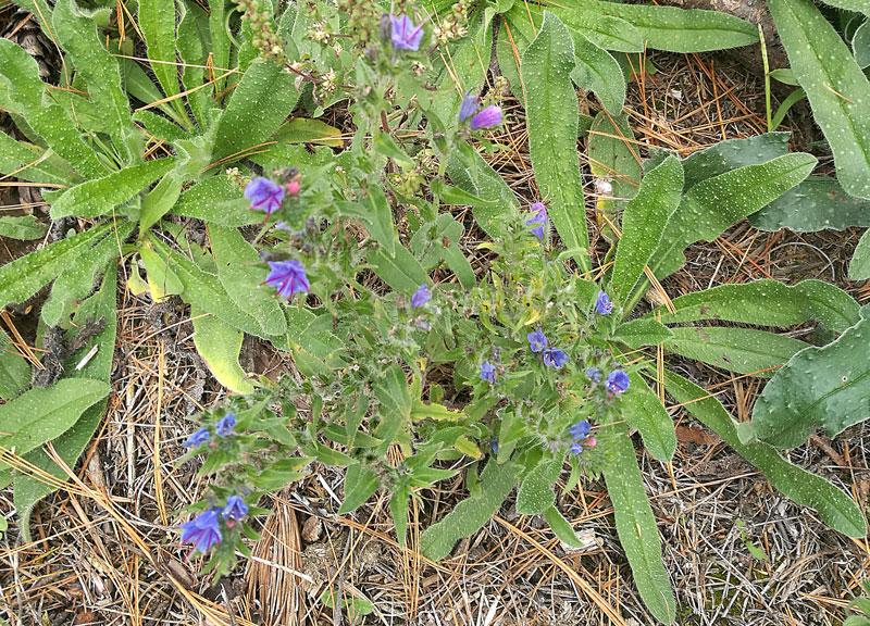 Bild 2 Pflanzen unterwegs auf unserer kurzen Wanderung