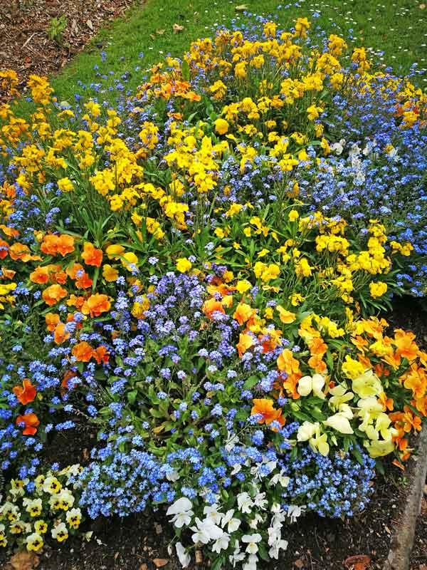 Bild 23 Blumen in einem Park in Honfleur.