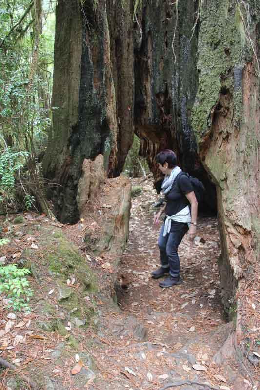 Bild 30 Wanderung parallel zum Smith River in den Redwoods auf dem Hiouchi Trail