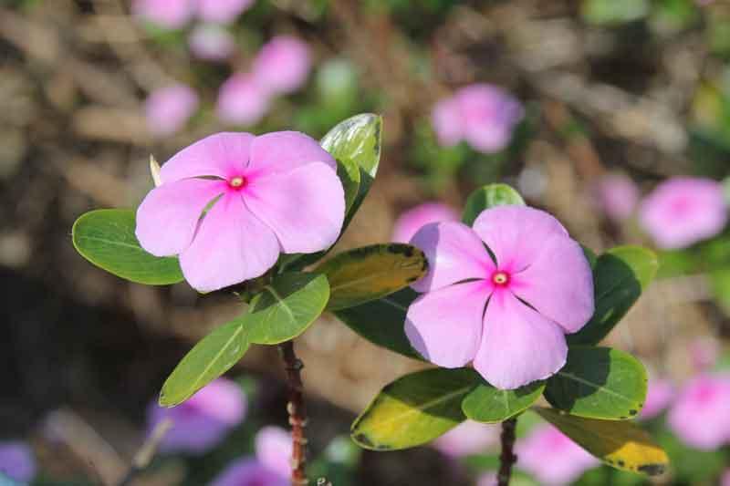 Bild 10 Blumen im Qurum Park in Muscat