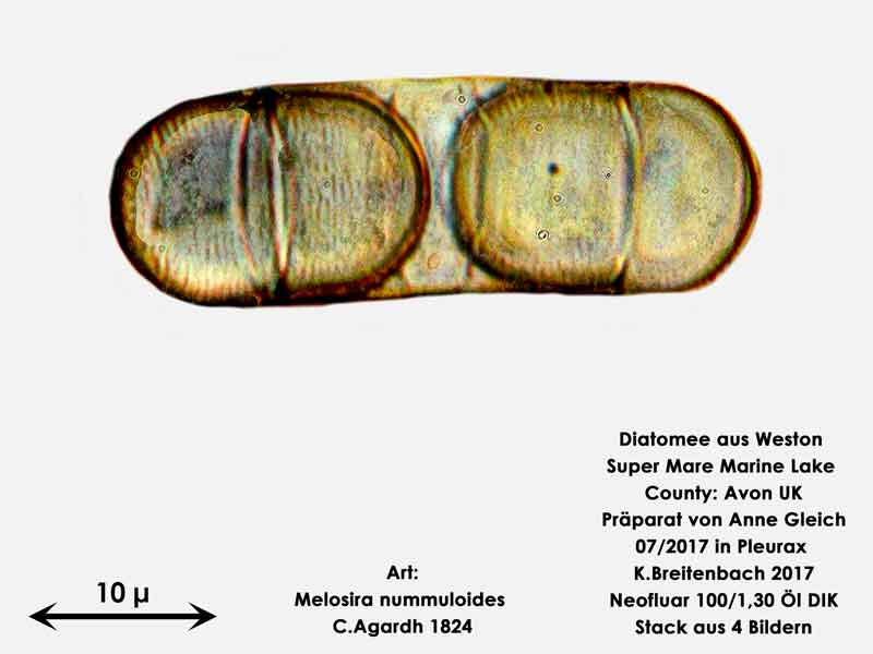 Bild 27 Diatomeen aus Weston Super Mare, UK Art: Melosira nummuloides C.Agardh 1824