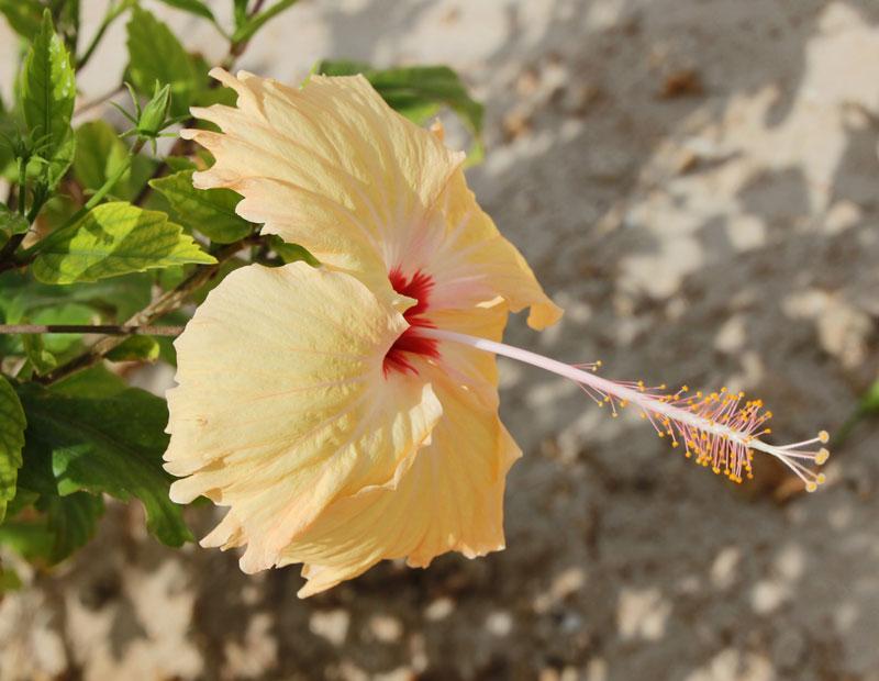 Bild 1 Blumen in der Rotana Hotelanlage