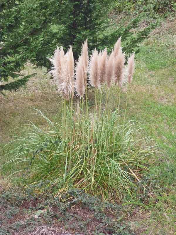Bild 13 Pflanzen auf dem KOA