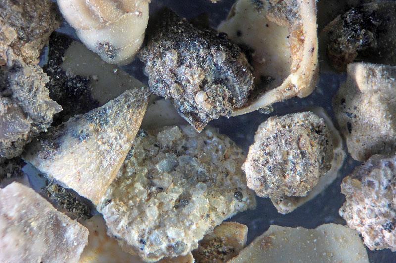 Bild 2 Sand aus Kobrow - Sternberger Gestein - fossil aus dem Oligozän