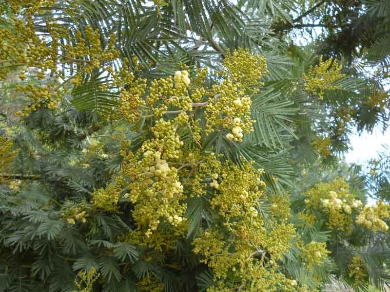 Bild 21 Pflanzen auf der Levadawanderung