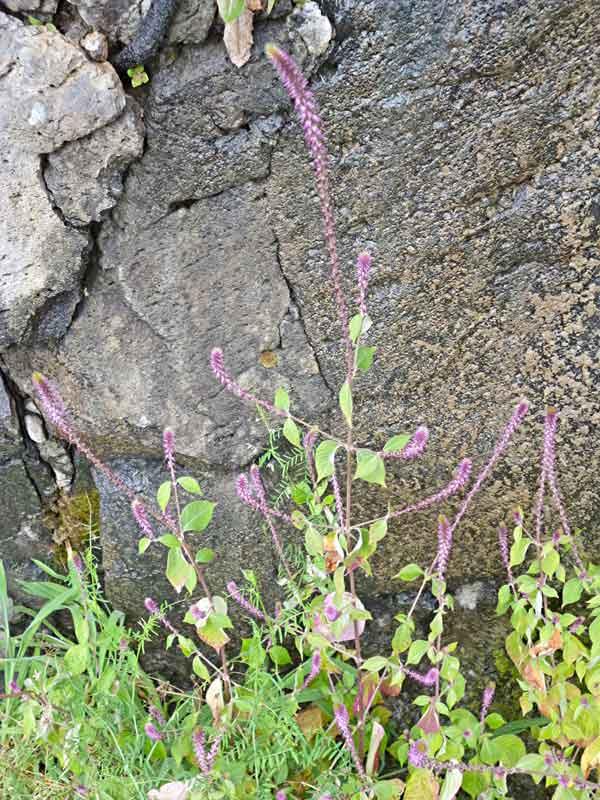 Bild 21 Blumen und Pflanzen unterwegs am Levadarand