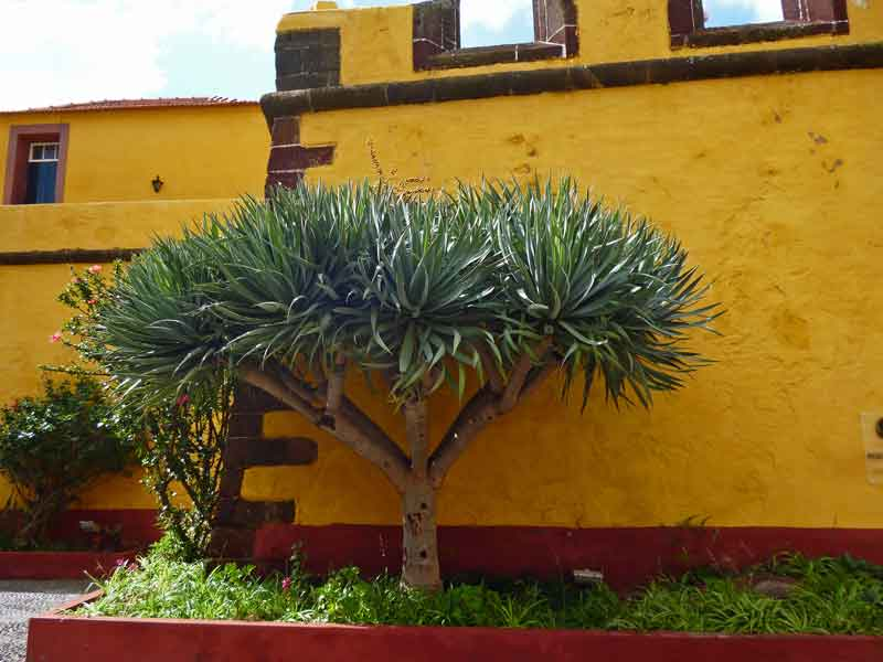 """Bild 12 Vor dem alten Fort """"Fortaleza de Sao Tiago"""""""