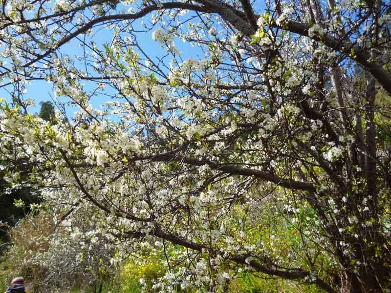 """Bild 14 Blüten auf dem Levadaweg """"do Norte"""""""