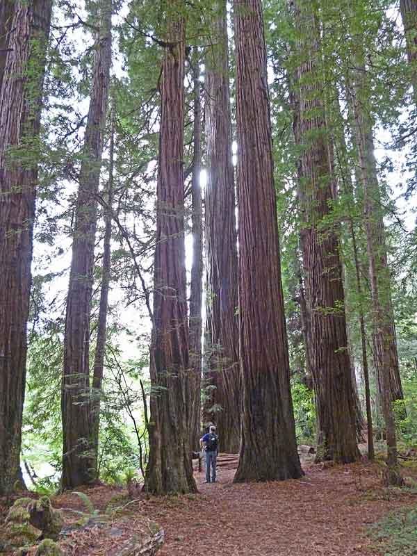 Bild 15 Wanderung parallel zum Smith River in den Redwoods auf dem Hiouchi Trail