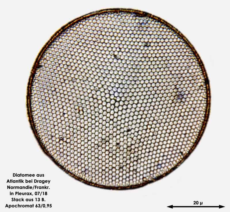 Bild 36 Diatomee aus dem Atlantik bei Draghey de Monton (Normandie). Art: Coscinodiscus radiatus Ehrenberg 1840