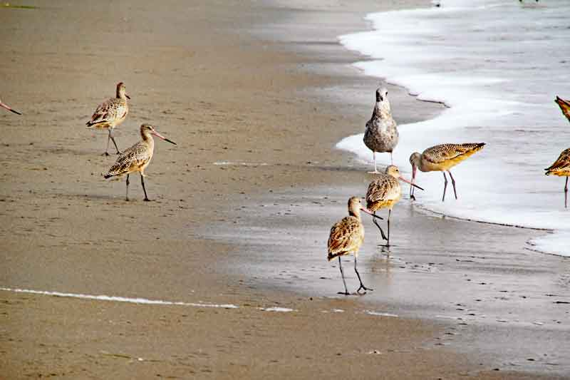 Bild 14 Vögel am Pazific