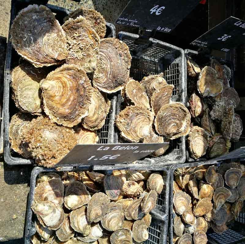 Bild 5 Austern schlemmen überall in Cancale