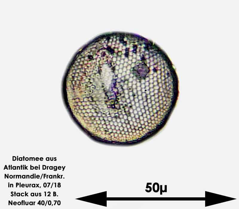Bild 36 Diatomee aus dem Atlantik bei Draghey de Monton (Normandie). Gattung: Coscinodiscus sp.