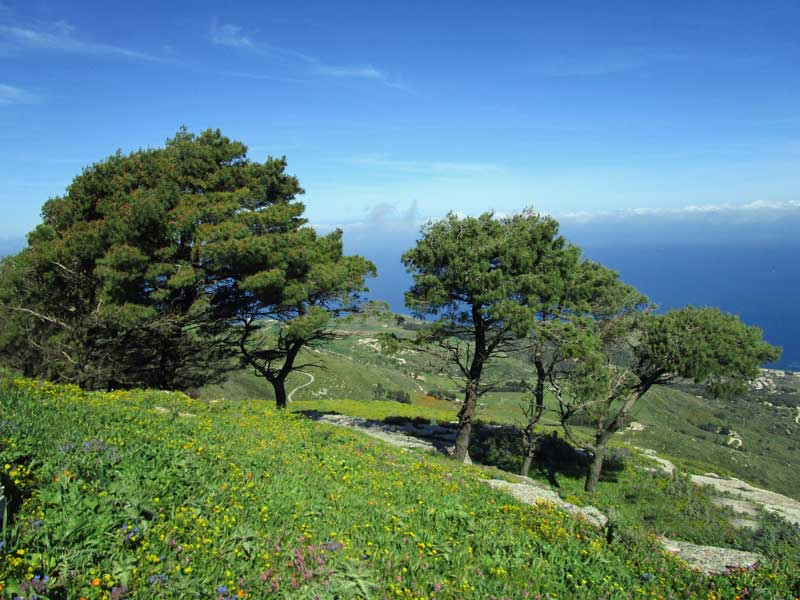 Erice - Die Bäume werden hier durch den Wind gerichtet