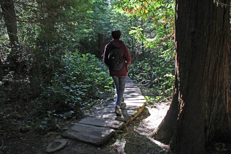 Bild 19 Der Weg führt zum teil auf Bohlen entlang