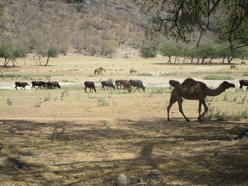 Bild 10 Tiere im Wadi Darbat